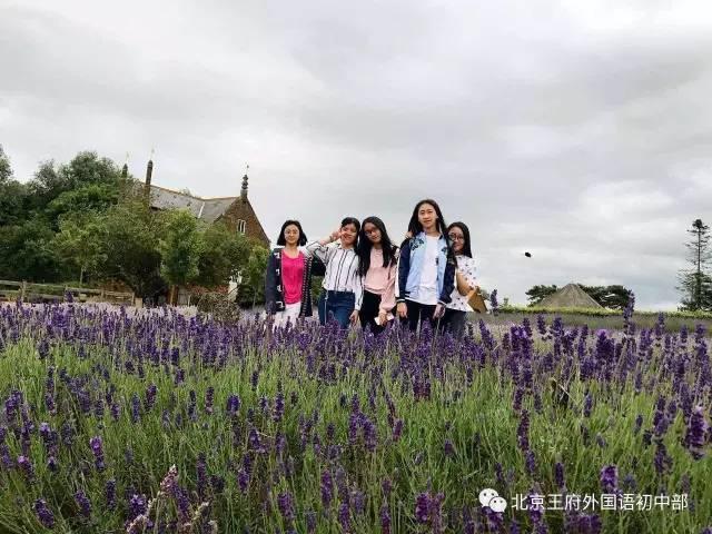 """""""王府学子在英国""""丨中国文化使者与薰衣草农场花园的相遇"""