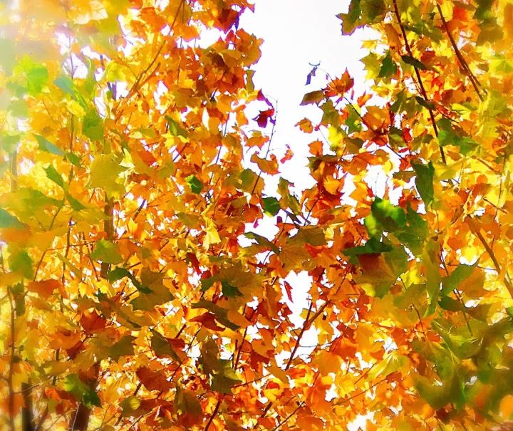 Enjoy the Most Beautiful Fall Pictures of BRFLS